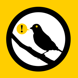 ateliers:serveurmail:canary-1-sq.png